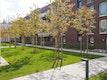 L+ | Wohnbebauung Osterbekstraße Baumpflanzung Kupferfelsenbirne