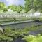 Farn- und Gräsergarten im Birnbachgrünzug
