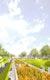 Perspektive Stadtgarten