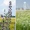 Naturschutzfachliches Monitoring Tempelhofer Feld