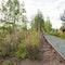Gleisgärten mit Wildstaudenpflanzung